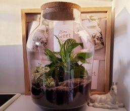 Zajęcia online z tworzenia roślin w słojach - Budżet Obywatelski